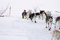 William Kleedehn runs up the bank of the Yukon river as he arrives in Galena on Saturday afternoon during the 2008 Iditarod