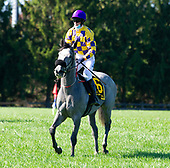 1st Apprentice Rider Flat - Withoutdestination