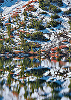 Ellery Lake with fall color and reflection after snowfall. Inyo National Forest, California