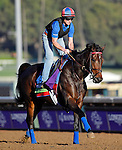 ARCADIA, CA - NOV 02: Miss Temple City, owned by Sagamore Farm, LLC, Allen Rosenblum & The Club Racing LLC and trained by H. Graham Motion, exercises in preparation for the Breeders' Cup Mile at Santa Anita Park on November 2, 2016 in Arcadia, California. (Photo by Scott Serio/Eclipse Sportswire/Breeders Cup)