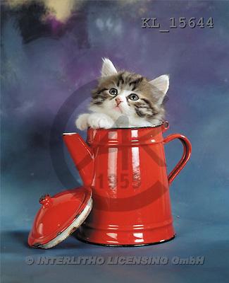 Interlitho, Alberto, ANIMALS, cats, photos, cat, red can(KL15644,#A#) Katzen, gatos