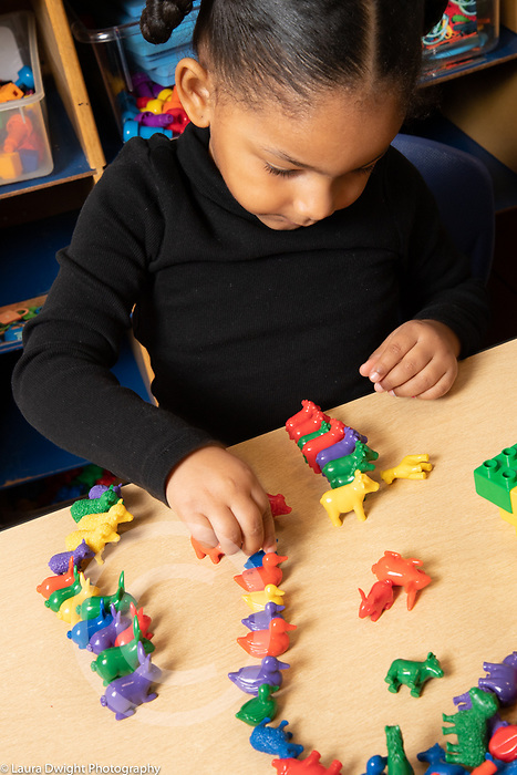 Education preschool 3 year olds girl sorting small colored plastic animals by type of animal