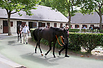 August 15, 2021, Deauville (France) -  Stable area at the Deauville Racecourse. [Copyright (c) Sandra Scherning/Eclipse Sportswire)]