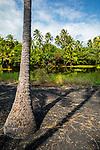 Pond Ajacent To Punalu'u Black Sand Beach Ajacent To Punalu'u Black Sand Beach