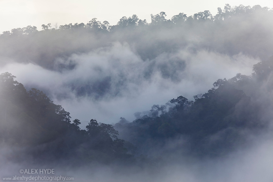 Rainforest at dawn, Danum Valley, Sabah, Borneo, Malaysia. May 2011.