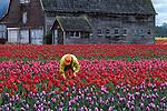 Portfolio of Tulip Image Collection