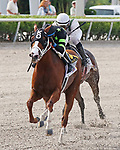 June 29, 2019:  #6 Stormy Embrace (FL) with jockey Wilmer Garcia on board wins the 2019 Princess Rooney G2 Stakes at Gulfstream Park in Hallandale Beach, Florida, on June 29th, 2019.  LizLamont/Eclipse Sportswire/CSM