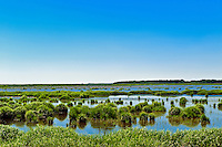 Wetlands habitat, NJ, New Jersey,, USA