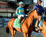 NEW YORK, NY - FEB 04: Bonus Points in post parade for the Withers Stakes on Withers Stakes Day at Aqueduct Racetrack on February 4, 2017 in the Ozone Park neighborhood of New York, New York. (Photo by Sue Kawczynski/Eclipse Sportswire/Getty Images)