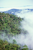 Amazon, Brazil. Aerial view of rainforest with morning mist.