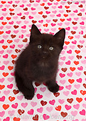 Kim, REALISTIC ANIMALS, REALISTISCHE TIERE, ANIMALES REALISTICOS, photos+++++,GBJBWP43174,#a#, EVERYDAY