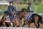 OCT 27 2014:Cristina's Journey, trained by Dale Romans, exercises in preparation for the Breeders' Cup Juvenile Fillies at Santa Anita Race Course in Arcadia, California on October 27, 2014. Kazushi Ishida/ESW/CSM