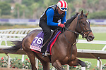 DEL MAR, CA - NOVEMBER 01: Wonder Gadot, owned by Gary Barber and trained by Mark E. Casse, exercises in preparation for the 14 Hands Winery Breeders' Cup Juvenile Fillies during morning workouts at Del Mar Thoroughbred Club on November 1, 2017 in Del Mar, California. (Photo by Anna Purdy/Eclipse Sportswire/Breeders Cup)