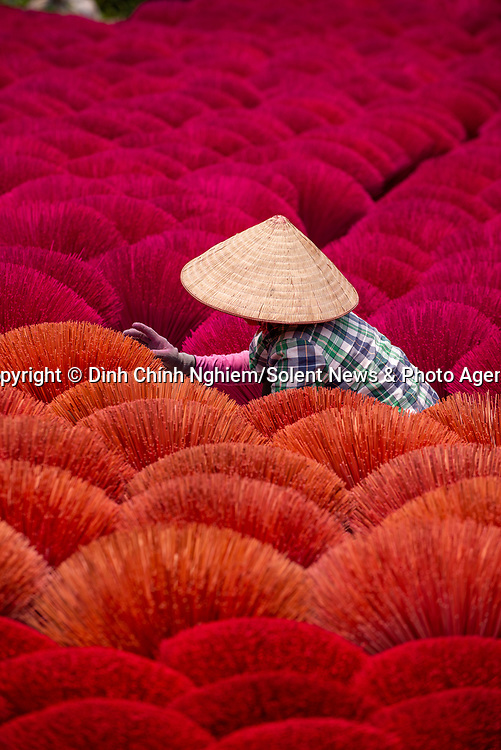 Pictured:   A worker crouches amid hundreds of bunches of brightly coloured incense sticks.<br /> <br /> The bright red sticks, which cover more than 200 square metres, are left to dry in the sun before being taking into a workshop and infused with fragrance.<br /> <br /> The locals use a mixture of cinnamon powder, rice husks and sawdust to produce the sticks.  SEE OUR COPY FOR FULL DETAILS.<br /> <br /> <br /> Please byline: Dình Chính Nghiem/Solent News<br /> <br /> © Dình Chính Nghiem/Solent News & Photo Agency<br /> UK +44 (0) 2380 458800