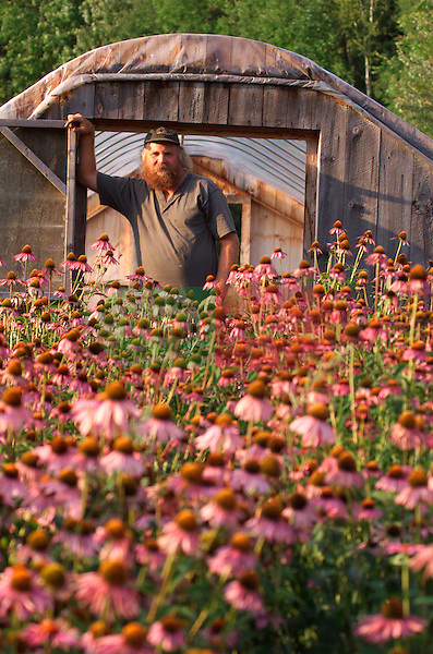 Organic farmer with bowl or freshly picked corn , standing in front of the herb Echinacea angustifolia or common purple coneflower , helpful in support of ear infections , vaginal yeast infections , colds , flu , and chronic infections ; it helps boost T-cell production and raises white blood cell count