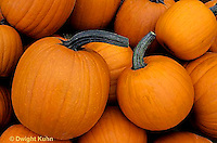 HS24-018x  Pumpkin - harvested - Tom Fox variety