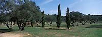 Europe/Provence-Alpes-Côte d'Azur/83/Var/Iles d'Hyères/Ile de Porquerolles: Collection variétale d'oliviers au Conservatoire Botanique National Méditerranéen
