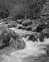 """""""Creek On The Chimneys Trail"""" <br /> Great Smoky Mountains National Park, Tennessee<br /> <br /> This creek is located two minutes from the Chimney Tops trailhead on Highway 441 in the Great Smoky Mountains National Park. The scene shows a typical Park stream with rounded rocks and Rhododendron or Mountain Laurel growing on its banks. A moderately slow shutter speed was used to blur the water enough so it looked smooth but not blur it so much that the general shape of water flow was lost."""