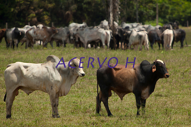 """Fazenda da AgroExport para descanso de gado.Latitude :         2°13'21.71""""SLongitude:   48°47'14.06""""OMojú, Pará, Brasil.Foto Paulo Santos<br /> 07/11/2013"""