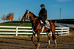 October 31, 2020: Dreamer's Disease, trained by trainer Robertino Diodoro, heads back to the barn after exercising in preparation for the Breeders' Cup Juvenile at Keeneland Racetrack in Lexington, Kentucky on October 31, 2020. Scott Serio/Eclipse Sportswire/Breeders Cup/CSM