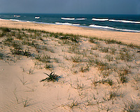 The shore of the Atlantic Ocean in the Chincoteague National Wildlife Refuge; Assateague National Seashore, VA