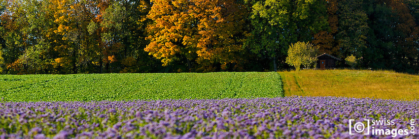 Flowers field with automn colored trees