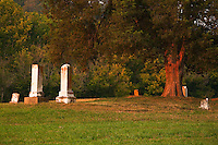 Old family gravesite and cedar, Washington County