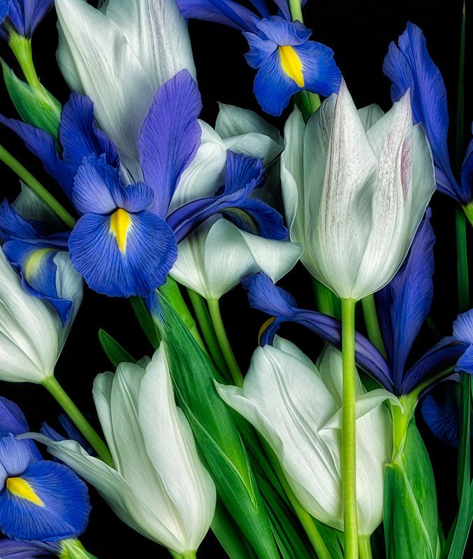 Boquet of tuliups and iris.
