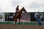APR 24,2015:Criterion,trained by David Hayes,prepares for the Audemars Piguet Queen Elizabeth 2nd Cup at Sha Tin in New Territories,Hong Kong. Kazushi Ishida/ESW/CSM