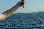 Foto: VidiPhoto..MIDDELFART - Een weergaloos systeem voor platvis, met als aas levende kweekzagers.