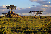 Short grass plain with kopjes and acacia trees in the  SERENGETI PLAINS NATIONAL PARK near LOLIANDO CAMP - TANZANIA
