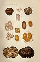 Europe/France/Midi-Pyrénées/46/Lot/Cahors: Planches de vieux livres sur la truffe - Collection Mr Pebeyre