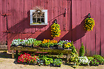 Flowers for sale at a Massachusetts farm
