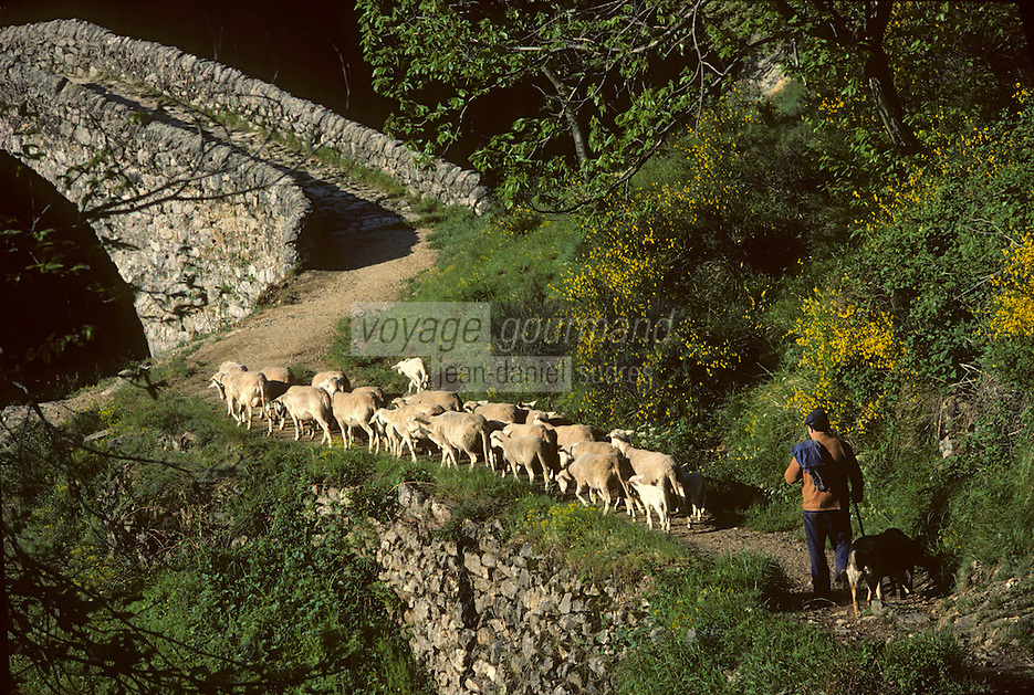 Europe/France/Rhone-Alpes/07/Ardeche/Thueyts: troupeau de moutons et Pont du Diable et gorges de l'Ardèche<br /> PHOTO D'ARCHIVES // ARCHIVAL IMAGES<br /> FRANCE 1980