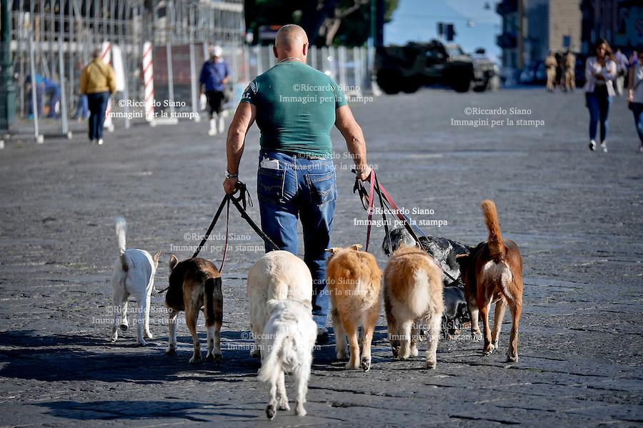 - NAPOLI 7 OTT 2014 -  cani a passeggio
