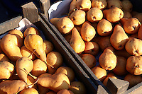 Fresh  organic Russett pears pictures