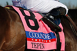 LEXINGTON, KY - APRIL 16: Saddle cloth for #8 Tepin and jockey Julien Leparoux after winning the 28th running of the Coolmore Jenny Wiley (Grade 1) $350,000 at Keeneland race course for owner Robert E. Masterson, and trainer Mark Casse.  April 16, 2016 in Lexington, Kentucky. (Photo by Candice Chavez/Eclipse Sportswire/Getty Images)