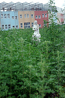 A statue is covered in overgrown weeds and behind lies the multi- coloured glass roofed green houses in Holland Village, a 600 acre re-creation of a Dutch city on the outskirts of Shenyang lies in ruins as a monument to corruption in China. Yang, a Dutch passport, got hooked on Holland while studying horticulture at Leiden University. Yang, who built the village with some of ill gotten millions, now languishes in jail and the town that is composed of several monumental buildings, plus windmills, artificial lakes, canals, a fullsize sailing ship, 1400 luxury apartments and even an indoor beach.