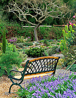 Bench in garden with purple Scilla flowers. Northwest Garden Nursery. Eugene, Oregon.