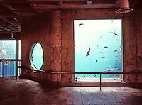 Monterey CA:  Monterey Bay Aquarium--Interior. Kelp Forest Tank, upper portion