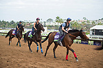 DEL MAR, CA - NOVEMBER 01: from L-R Senga, Zelzal and Karar take track during morning workouts at Del Mar Thoroughbred Club on November 1, 2017 in Del Mar, California. (Photo by Anna Purdy/Eclipse Sportswire/Breeders Cup)