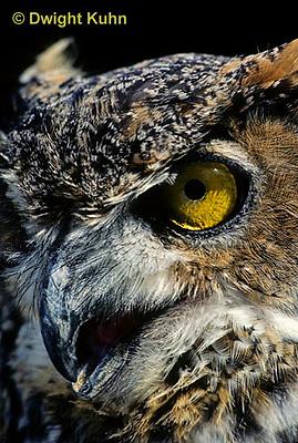OW06-041z  Great horned owl - showing eyes and beak - Bubo virginianus