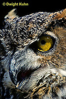 OW06-041z  Great horned owl - showing eyes and beak - Bubo virginianus