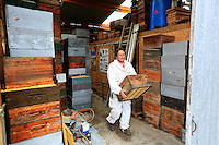In a beekeeper's shed, preparation of the hives and the supers or honey chambers.///Dans le hangar d'un apiculteur, préparation des ruches et des hausses.