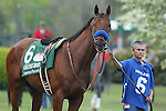 April 11, 2015: American Pharoah before the running of the Arkansas Derby at Oaklawn Park in Hot Springs, AR. Justin Manning/ESW/CSM
