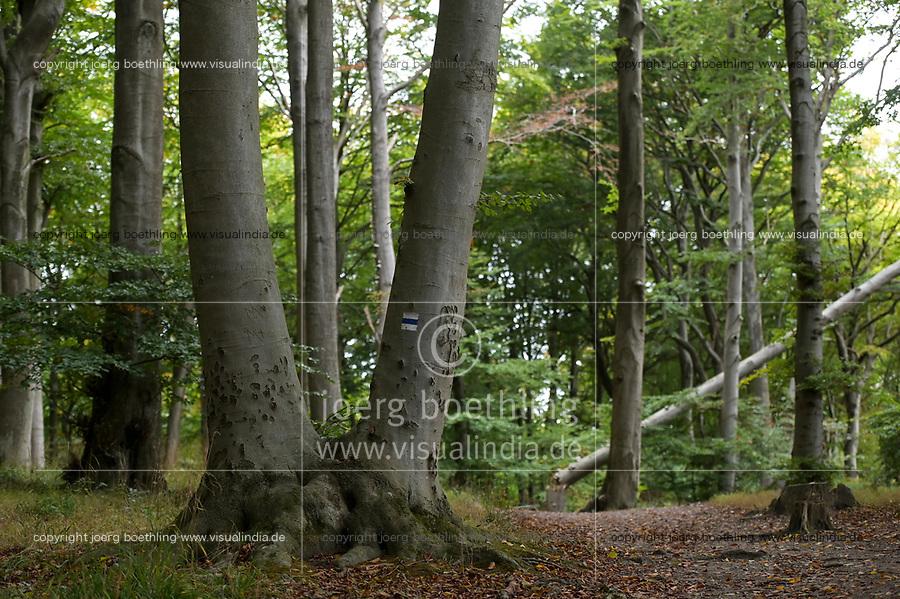 GERMANY, Ruegen, beech forest / DEUTSCHLAND, Mecklenburg-Vorpommern, intakter Wald, Laubwald mit Buchen im Nationalpark Jasmund, Wanderweg, Baummarkierung