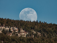 A daylight photograph of a SuperMoon rising over the treetops. This is a Landscape Art Print Photograph of a Moonrise over the Monashee Mountains in British Columbia Canada.