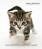 Kim, ANIMALS, fondless, photos(GBJBWP27879,#A#) Tiere ohne Fond, animales sind fondo