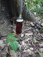 Resex Chico Mendes<br /> , Xapurí, Acre, Brasil.<br /> Foto: ©Eric Stoner Extração de copaiba.