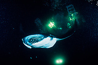 reef manta ray, Mobula alfredi, feeding on plankton attracted by the lights of a dive boat, the Kona Agressor II, Kona, Big Island, Hawaii, Pacific Ocean